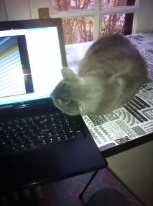 2012 K-laptop